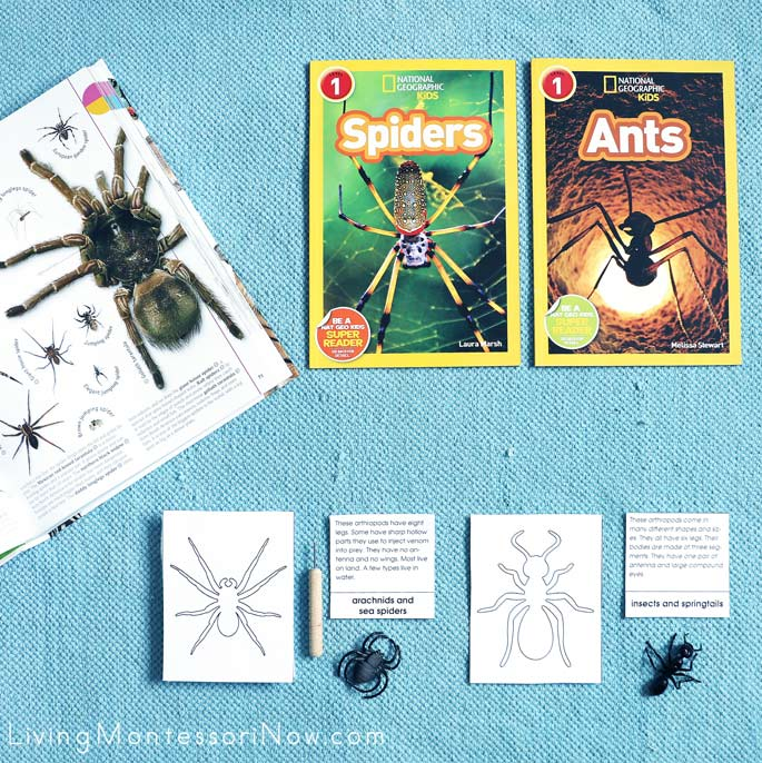 Spider and Ant Books with Montessori Punch Work (Arachnids Compared to Insects)