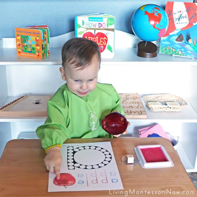 Toddler Vocabulary Work Before Apple Rubber Stamping Work