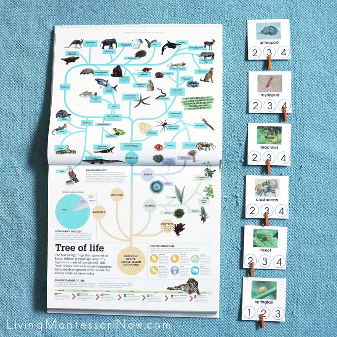Tree of Life from Picturepedia with Arthropod Syllable Sorting Clip Cards