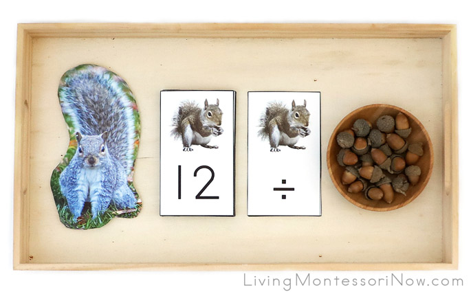 Acorn and Squirrel Division Tray