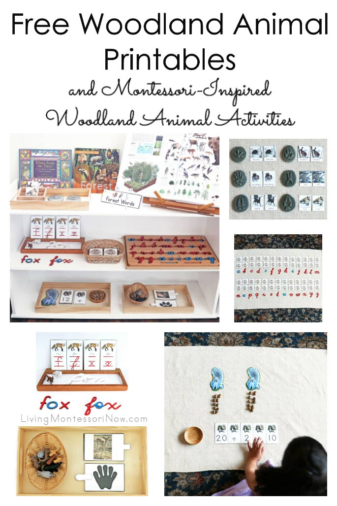 Free Woodland Animal Printables and Montessori-Inspired Woodland Animal Activities
