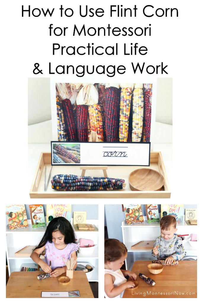 How to Use Flint Corn (Ornamental Corn) for Montessori Practical Life and Language Work