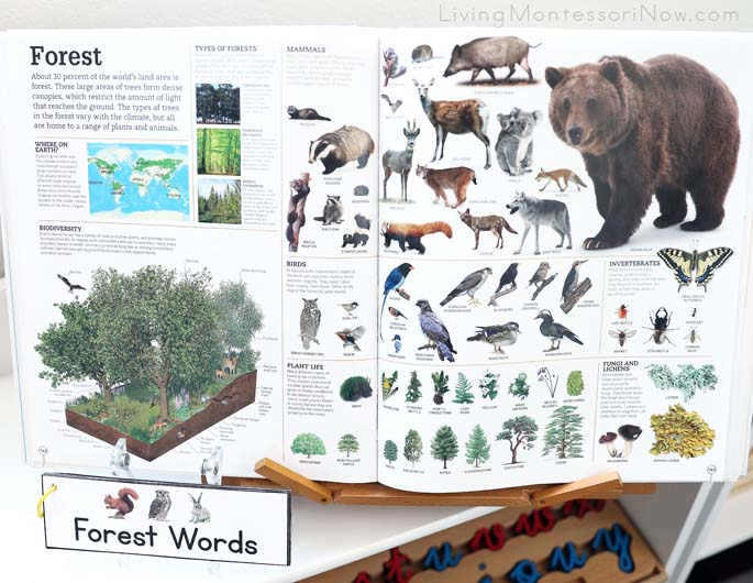 Picturepedia Forest Pages with Forest Words Booklet