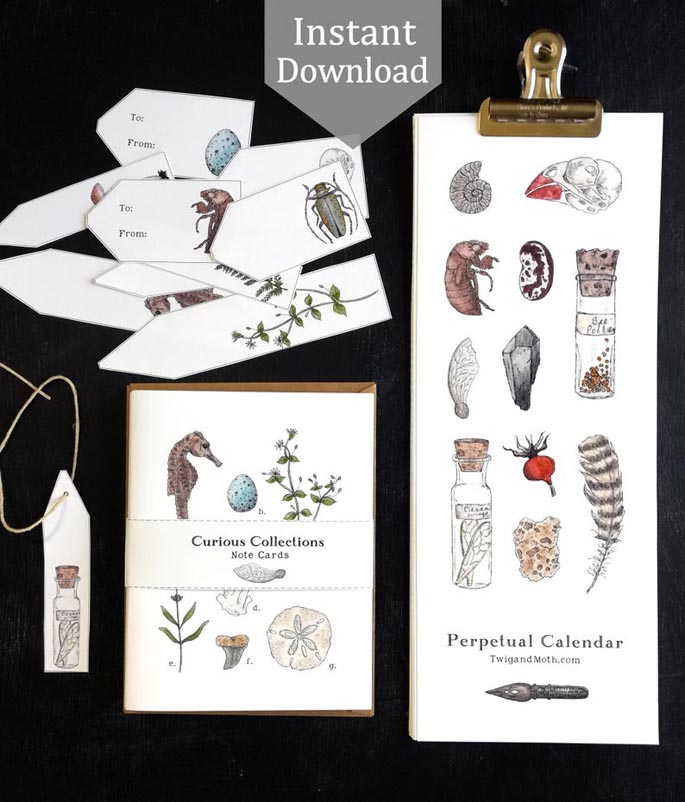 Curious Collections - Printable Perpetual Calendar from Twig and Moth