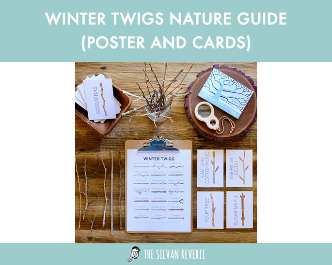 Winter Twigs Nature Guide (Poster and Cards) from The Silvan Reverie on Etsy