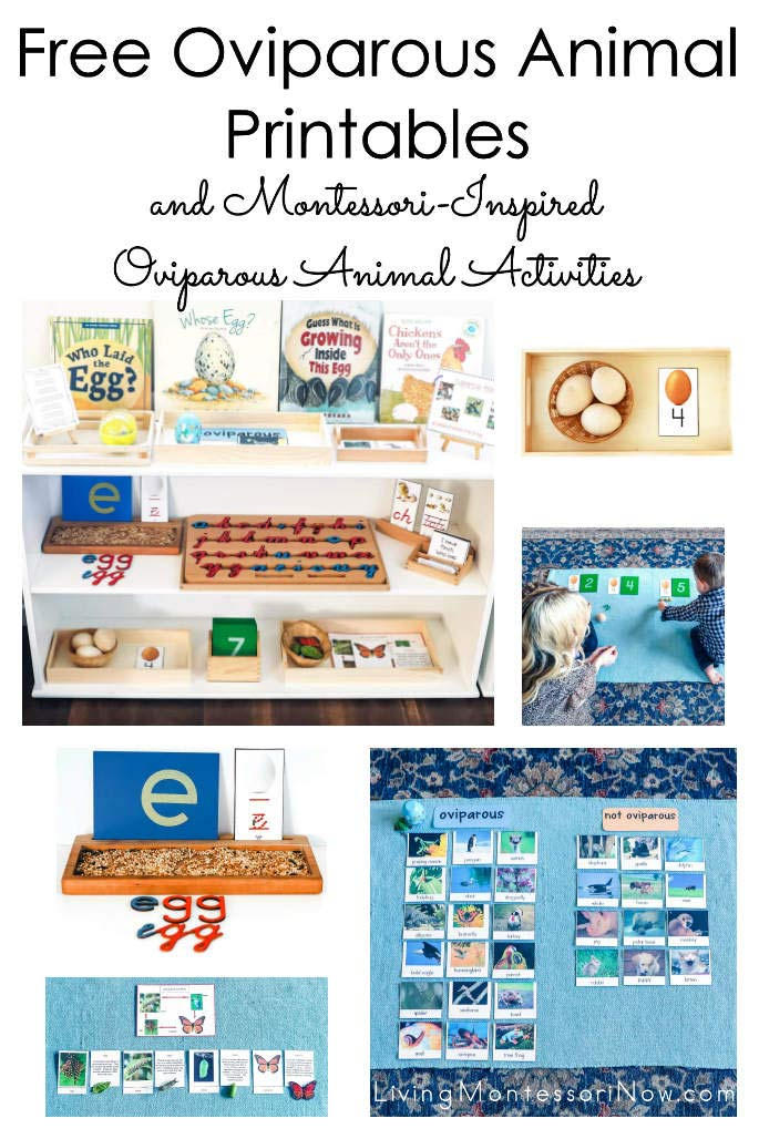 Free Oviparous Animal Printables and Montessori-Inspired Oviparous Animal Activities