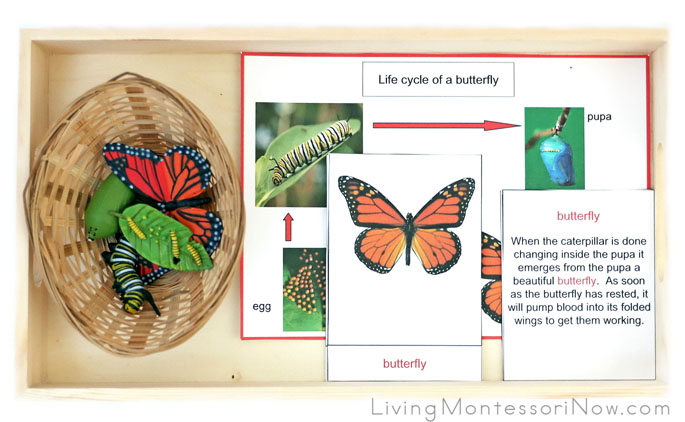 Life Cycle of a Butterfly Tray with Life Cycle Printables and Monarch Butterfly Life Cycle Figures from Safari Ltd