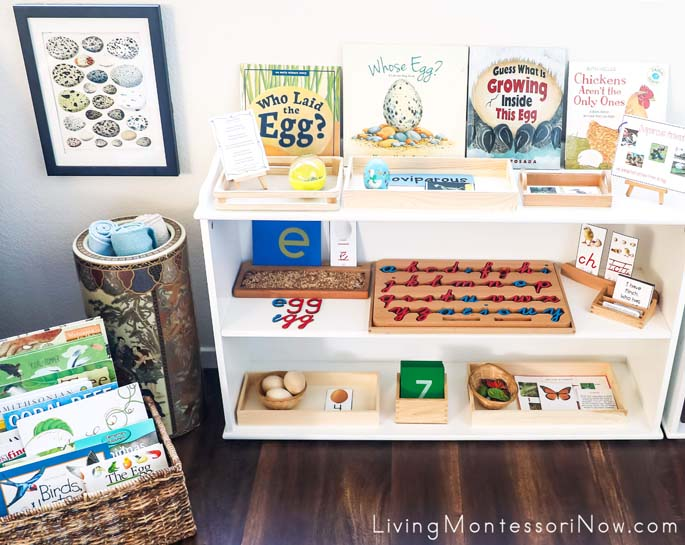 Montessori Book Basket and Shelves with Oviparous Animal Themed Activities