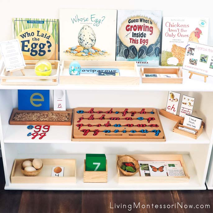 Montessori Shelves with Oviparous Animal Themed Activities