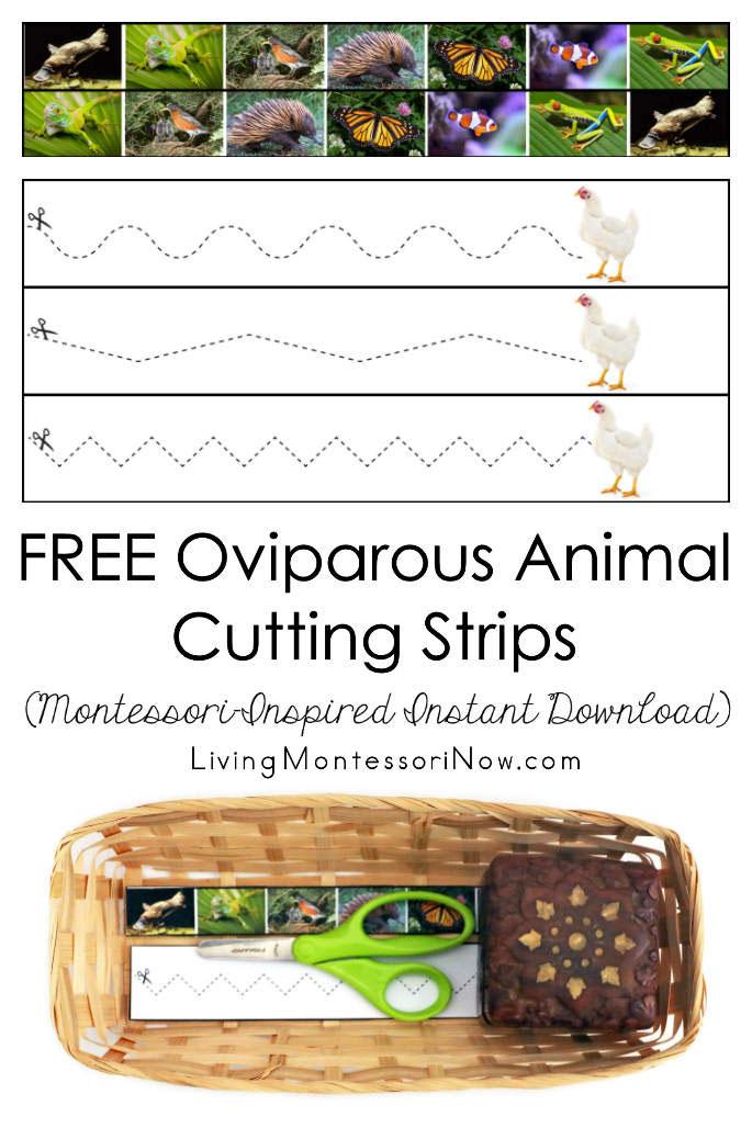 FREE Oviparous Animal Cutting Strips (Montessori-Inspired Instant Download)
