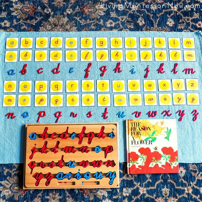 Matching Manuscript and Cursive Dandelion Flower Letters with Cursive Movable Alphabet
