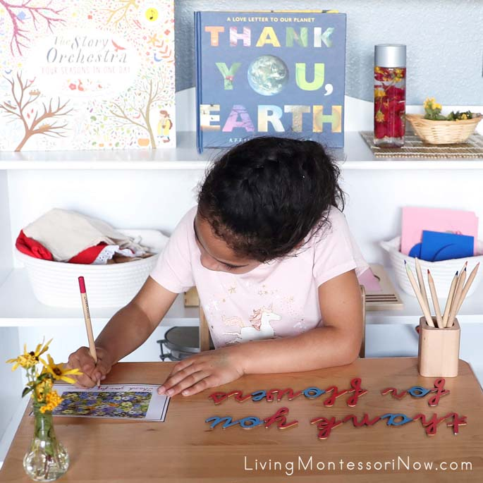 """Tracing Cursive """"Thank You For Flowers"""" Mindfulness Card after Building Words with Cursive Movable Alphabet"""