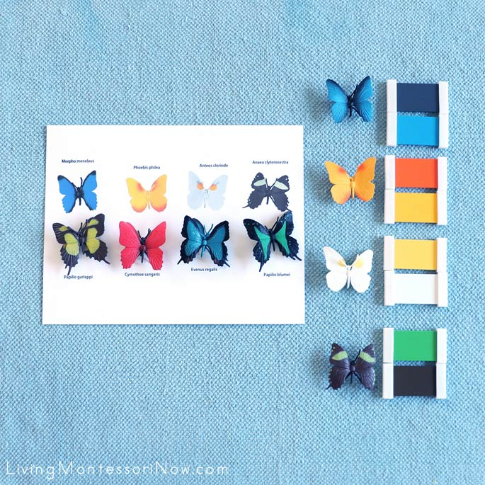 Work with Safari Ltd Butterflies TOOB, Key, and Color Matching with Montessori Color Box 3