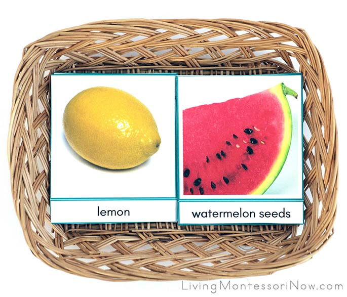 Fruit and Seed Matching Cards
