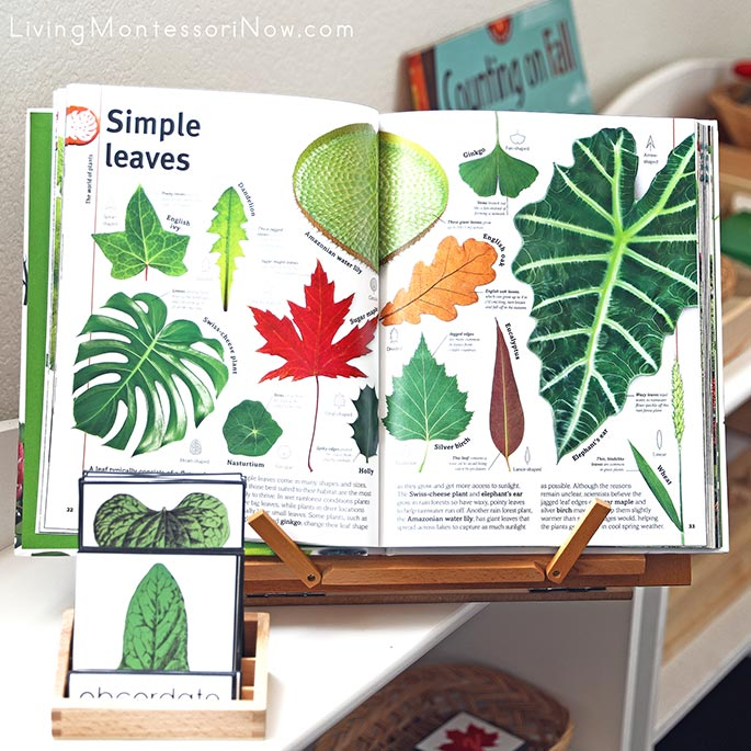 Trees, Leaves, Flowers & Seeds Book with Fall Leaf Materials