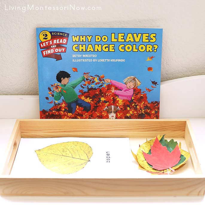 Why Do Leaves Change Color Book with Leaf Identification Activity