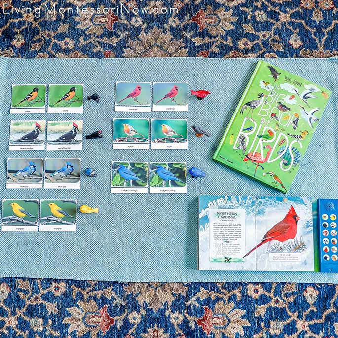 Backyard Birds TOOB Figures and Cards with The Big Book of Birds and The Little Book of Backyard Bird Songs