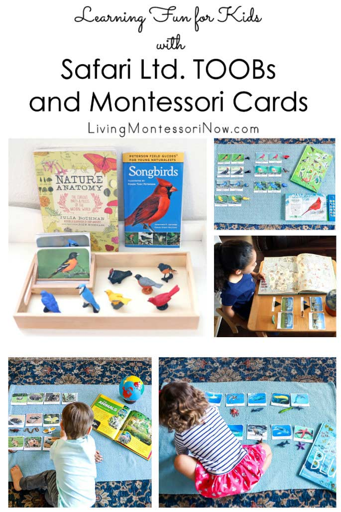 Learning Fun for Kids with Safari Ltd. TOOBs and Montessori Cards