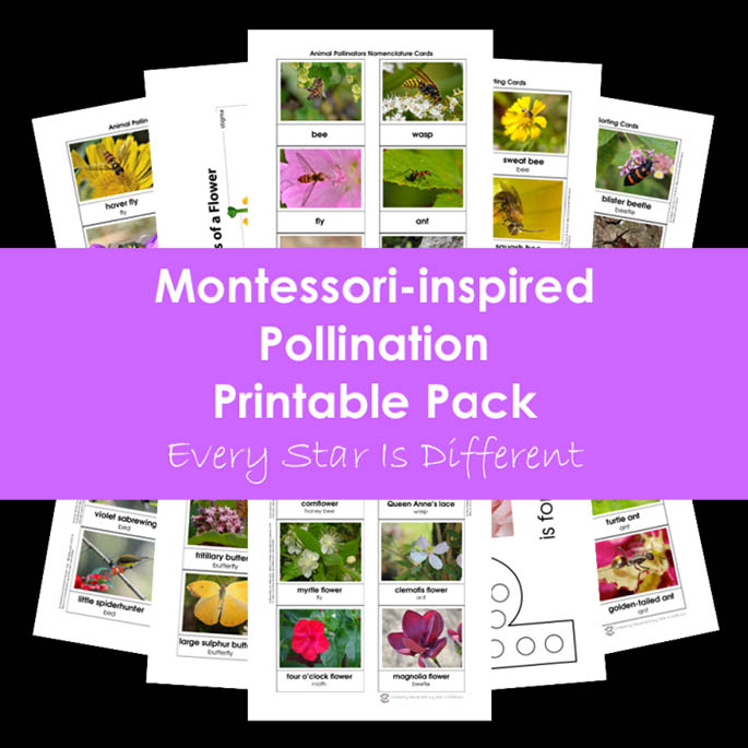 Montessori-Inspired Pollination Printable Pack from Every Star Is Different