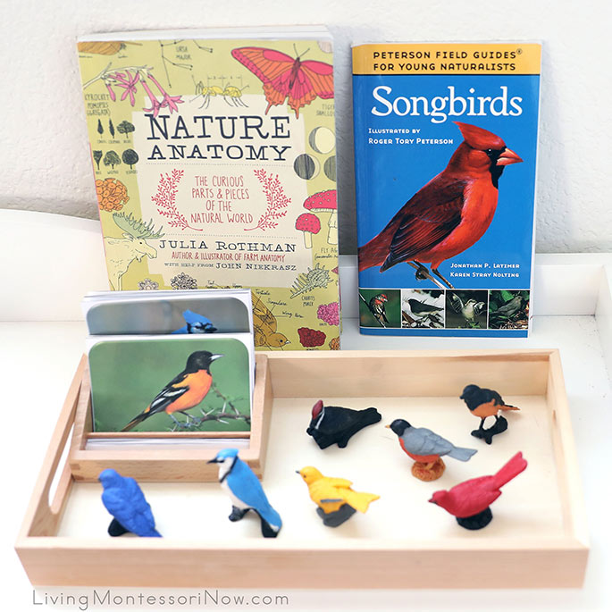Nature Anatomy and Songbirds Books with Backyard Birds TOOB Figures and 3-Part Cards