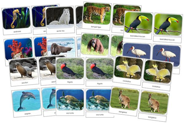 Safari TOOB Cards from Montessori Print Shop
