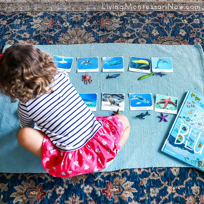 Working with Ocean TOOB Figures and Cards