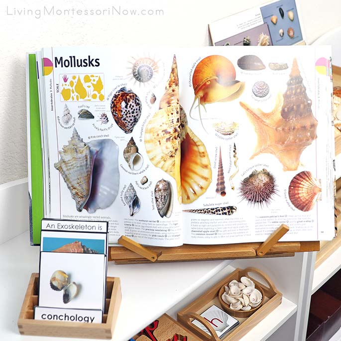 DK Smithsonian Animal Book with Seashell Nomenclature Cards and Seashell Activities