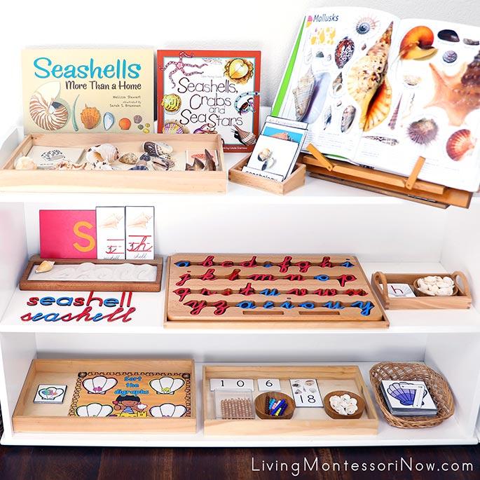 Montessori Shelves with Seashell-Themed Activities