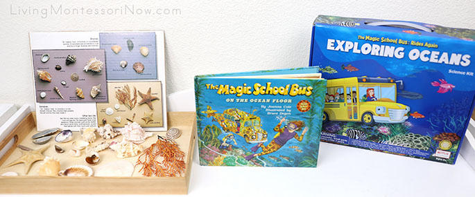 Seashell Collection with The Magic School Bus on the Ocean Floor Book and Magic School Bus Exploring Oceans Science Kit