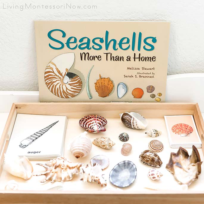 Seashells More Than a Home Book with Shells and Matching Cards