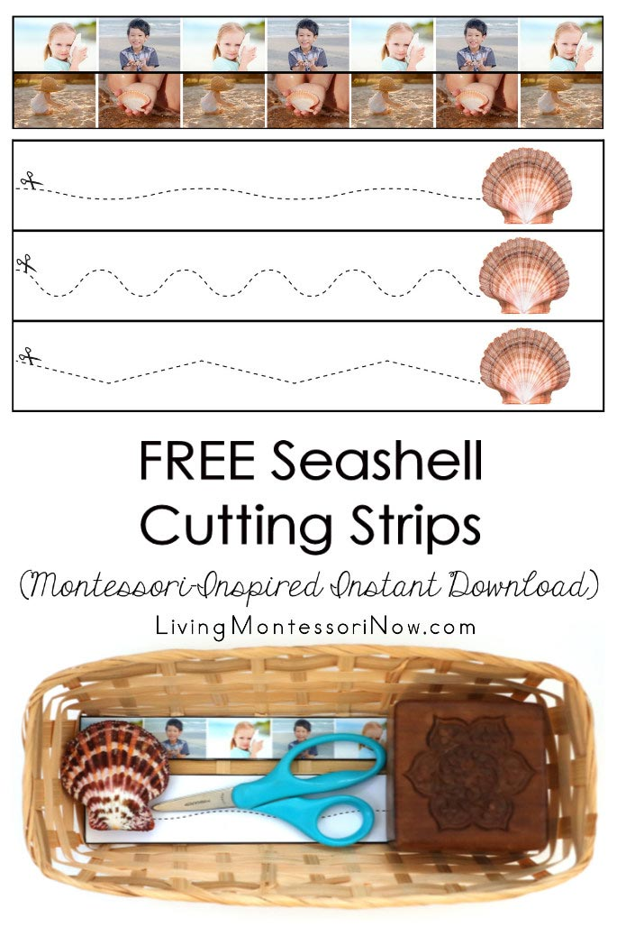 FREE Seashell Cutting Strips (Montessori-Inspired Instant Download)