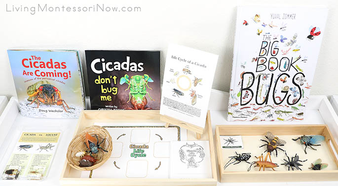 Montessori Shelf with Cicada and Locust Materials, Cicada Life Cycle Materials, and Noisy Insect Figures and Books