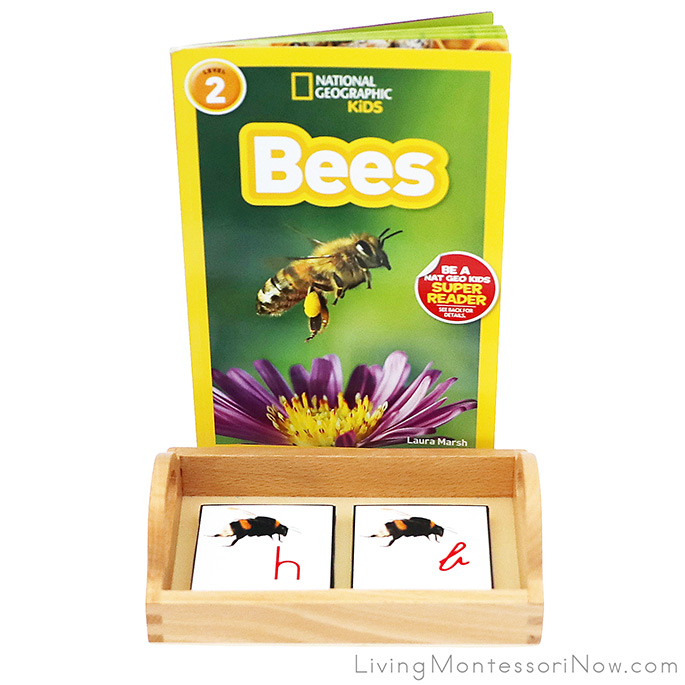 National Geographic Kids Bees Book with Bumblebee Alphabet Cards in Print and Cursive