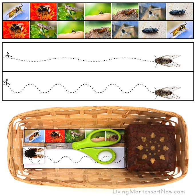 Noisy Insect Cutting Strips with Basket and Cicada Specimen