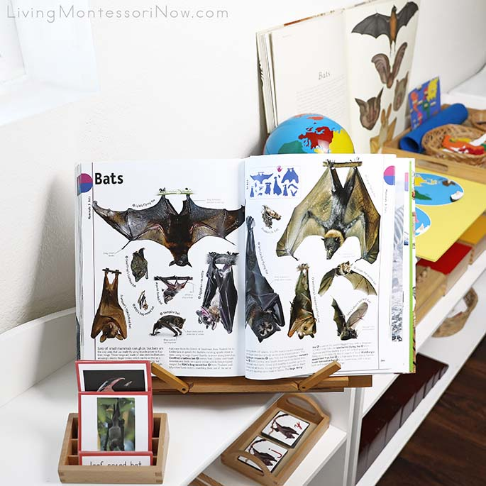 The Animal Book from DK Smithsonian with Types of Bats 3-Part Cards and Bat Geography Material
