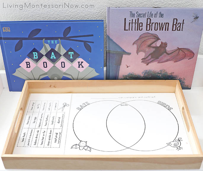 The Bat Book and The Secret Life of the Little Brown Bat with Bats and Birds Venn Diagram Activity