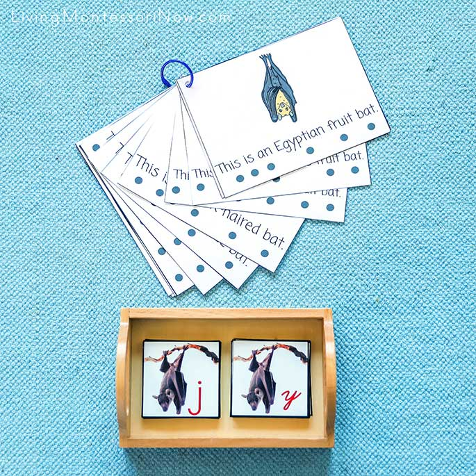 Types of Bats Book with Bat Alphabet Cards in Print and Cursive